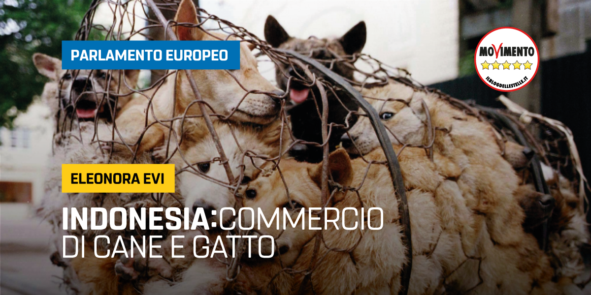 The dog and cat meat trade in Indonesia