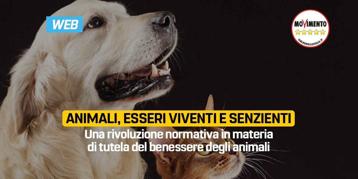 Animali, esseri viventi e senzienti.